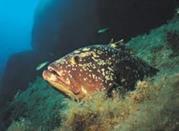 Punta Rubasacchi - Pantelleria