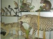 Museo di Storia Naturale - Merate
