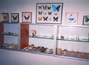 Museo Zoologico dei Vertebrati - Avellino
