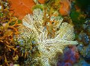 Taglio di Scauri e Punta Tre Pietre - Pantelleria