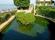 Fonte Aretusa Isola di Ortigia - Siracusa