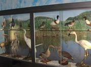 Museo Ornitologico Naturalistico