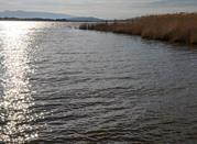 Lago di Burano - Capalbio