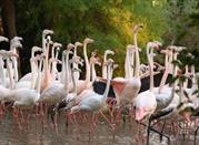 Zoo Punta Verde - Lignano Sabbiadoro
