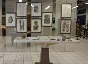Museo Anatomico - Siena