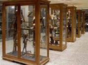 Museo dell'Istituto di Anatomia Patologica - Padova