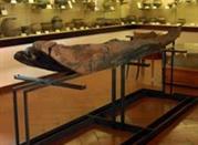 Museo della Società di Studi Patri - Gallarate