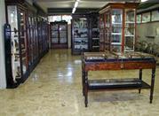 Museo Anatomico della Facoltà di Veterinaria - Pisa