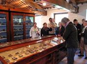 Museo di Storia Naturale A. Orsini - Ascoli Piceno