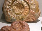 Museo del Fossile del Monte Baldo - Brentonico