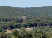 Torre Bassa - Magliano in Toscana