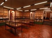 Museo Universitario di Storia Naturale e Strumentazione Scientifica - Modena
