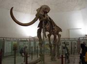 Museo Archeologico Nazionale d'Abruzzo - Chieti