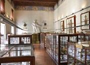 Museo di Storia Naturale - Parma