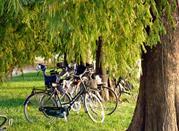 Parco del Mincio - Mantova