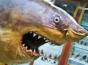 Museo di Zoologia - Bari