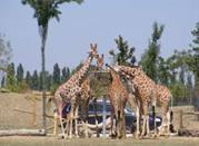 Safari Ravenna - Savio