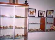 Museo Zoologico degli Invertebrati - Avellino