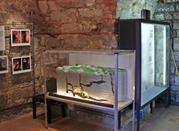 Museo Paleontologico della Rocca - Monfalcone