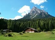 Parco Naturale Paneveggio - Bellamonte