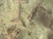 Arte incisioni rupestri - Pallare