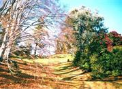Parco della Burcina - Biella