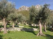 Parco Regionale dell'Olivo - Venafro
