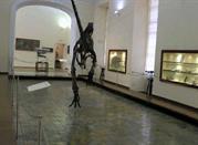 Museo di Paleontologia - Napoli