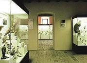 Museo Civico Ornitologico - Lonato
