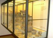 Museo della Terramara - Poviglio