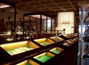 Museo di Storia Naturale A.Stoppani - Venegono Inferiore