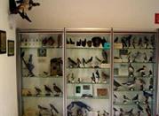 Museo Civico di Storia Naturale - Stazzano