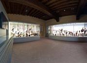 Museo Naturalistico del Frignano - Pavullo Nel Frignano