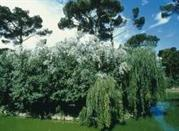 Parco Naturale di Cervia - Cervia