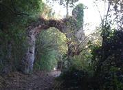 Monumento Naturale Galeria Antica - Roma
