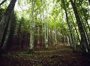 Arboreto di Vallombrosa - Reggello