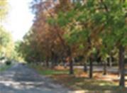 Parco sull'isola Carolina - Lodi