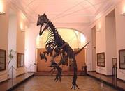Museo Zoologico - Padova