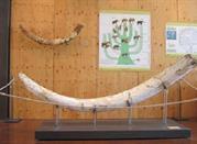 Museo Geopaleontologico Alto Aventino - Palena