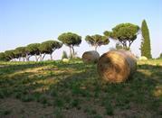 Parco di Vejo - Roma