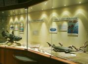 Museo Paleontologico - Mondaino
