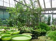 Orto Botanico Napoli - Napoli