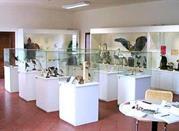 Museo di Scienze Naturali - Cesena