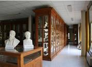 Museo di Anatomia Comparata - Roma