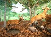 Museo Naturalistico del Parco dell'Orecchiella - San Romano in Garfagnana