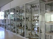 Museo Civico Naturalistico