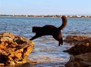 Spiaggia Su Pallosu - San Vero Milis