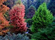 Orto Botanico delle conifere coltivate - Ome