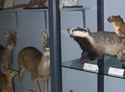 Museo di Scienze Naturali - Voghera