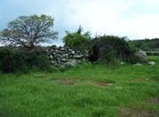 Tomba dei giganti Lassia Borore  - Birori